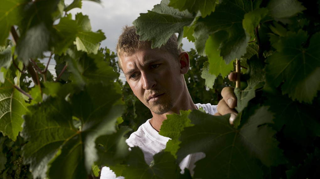 Vineyard Manager Kees Stapel joined the Boundary Breaks team in 2010.
