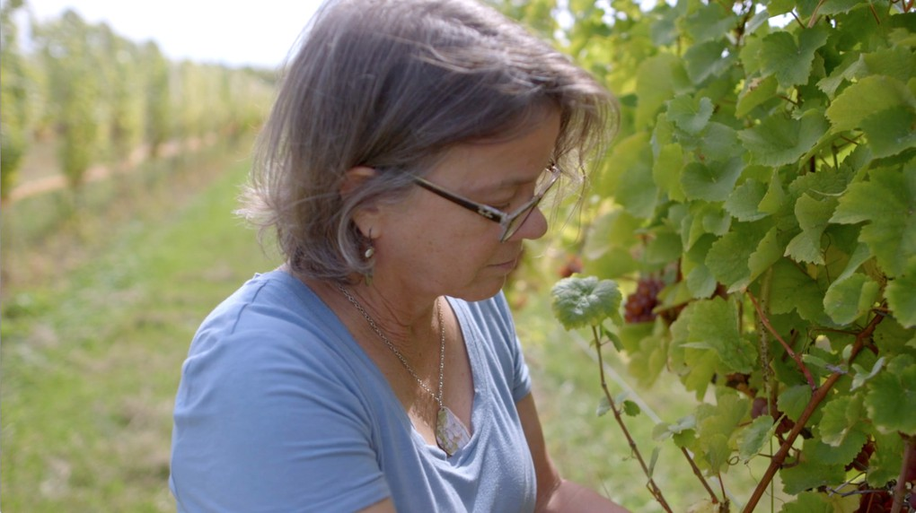 Owner Diana Lyttle checking grapes in the vineyard.