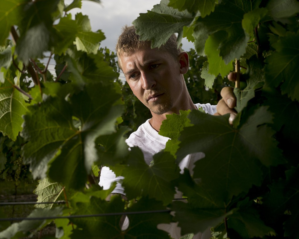 Careful attention in the vineyard yields higher-quality fruit and better wine.